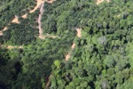 deforestation for oil palm -- sabah_1675