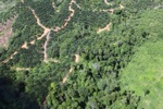 deforestation for oil palm -- sabah_1677