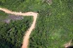 Logging road -- sabah_1684