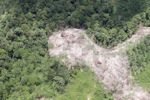 deforestation for oil palm -- sabah_1691