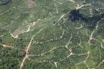 Oil palm plantation -- sabah_1704