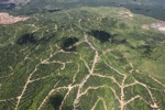 Oil palm plantation -- sabah_1705