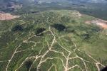 Oil palm plantation -- sabah_1707