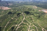 Oil palm plantation -- sabah_1708