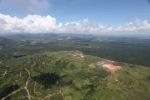 Oil palm plantation -- sabah_1709