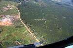 Oil palm plantation -- sabah_1717