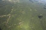 Oil palm plantation -- sabah_1721