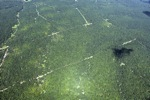 Oil palm plantation -- sabah_1722