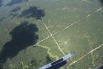 Oil palm plantation -- sabah_1732