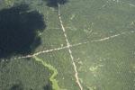 Oil palm plantation -- sabah_1733