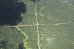 Oil palm plantation -- sabah_1734