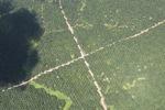 Oil palm plantation -- sabah_1735