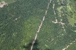 Oil palm plantation -- sabah_1736