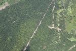 Oil palm plantation -- sabah_1738