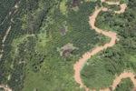 Oil palm plantation -- sabah_1739