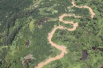 Oil palm plantation -- sabah_1740
