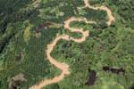 Oil palm plantation -- sabah_1743