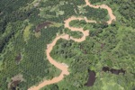 Oil palm plantation -- sabah_1744