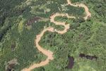 Oil palm plantation -- sabah_1745