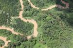Oil palm plantation -- sabah_1748