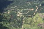 Oil palm plantation -- sabah_1752