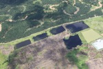 Oil palm plantation -- sabah_1754