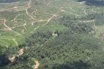 Oil palm plantation -- sabah_1759