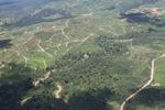 Oil palm plantation -- sabah_1760