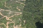 Oil palm plantation -- sabah_1764