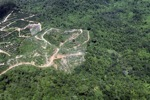 Oil palm plantation -- sabah_1768