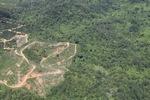 Oil palm plantation -- sabah_1769