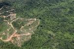 Oil palm plantation -- sabah_1770