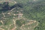 Oil palm plantation -- sabah_1771