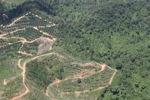 Oil palm plantation -- sabah_1772