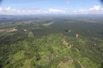 Oil palm plantation -- sabah_1776