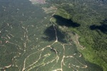 Oil palm plantation -- sabah_1795