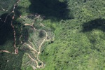 Oil palm estate -- sabah_1808