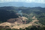 Fire burning on an oil palm plantation -- sabah_1830