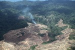 Fire burning on an oil palm plantation -- sabah_1843
