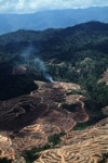 Fire burning on an oil palm plantation -- sabah_1844