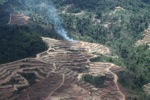 Fire burning on an oil palm plantation -- sabah_1847