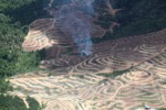 Fire burning on an oil palm plantation -- sabah_1849