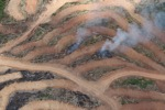 Fire burning on an oil palm plantation -- sabah_1857