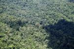 Borneo rainforest -- sabah_1870