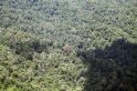 Borneo rainforest -- sabah_1871