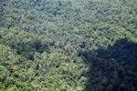 Borneo rainforest -- sabah_1872