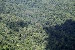 Borneo rainforest -- sabah_1873