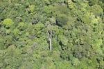Borneo rainforest -- sabah_1874