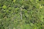 Borneo rainforest -- sabah_1876