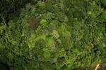 Borneo rainforest -- sabah_1877